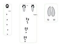 Jäljet kuvassa vasemmalta oikealle: kettu, metsäjänis ja rusakko sekä hirvi.