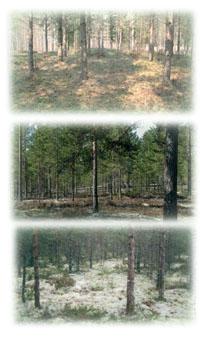 Harjun metsätyypit